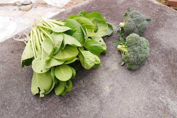 小松菜とブロッコリー