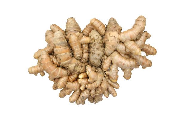 秋ウコンの根塊 薬草画像 グリーンポプリ