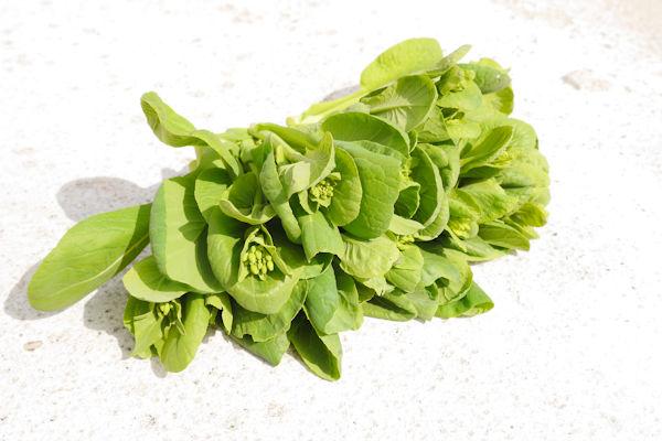 コマツナの花芽 グリーンポプリ野菜画像
