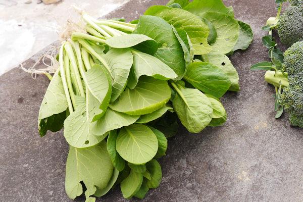 コマツナの葉 グリーンポプリ野菜画像